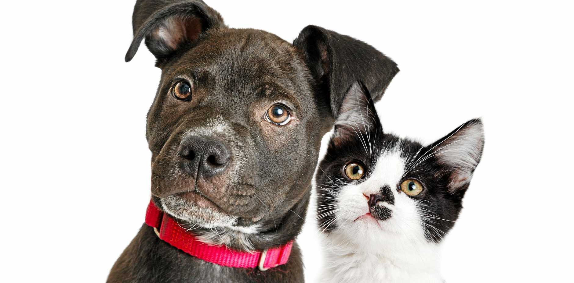 PETS: Four factors can increase lifespans through interaction with pets.