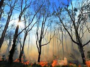 RFS busy with blazes despite region's total fire ban