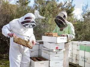 Aussies' fight for manuka