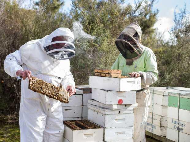 INDUSTRY ROW: Lindsay Bourke (left) from Australian Honey Products checks bee hives with his West Tamar head beekeper, Brad Deegan in Tasmania.
