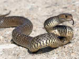 Snake catcher caught sitting on victim on police body camera