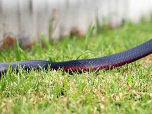 Protect your furry friend from dangerous snakes