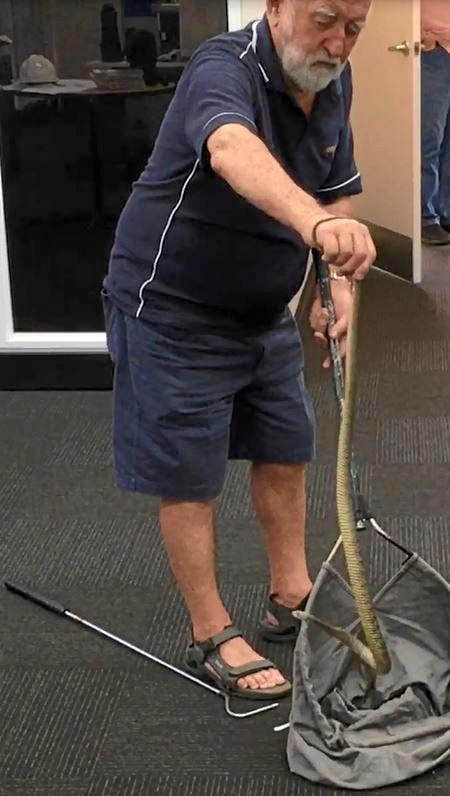 WATCH OUT: WIRES snake catcher Paul Jones brought a Clarence River brown snake - or rough-scaled snake - into The Daily Examiner office after catching the reptile in the precinct of the new Grafton Bridge project site on Monday, 25th September, 2017.