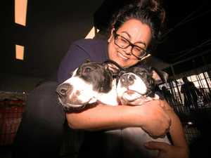 Dumped puppies find good homes