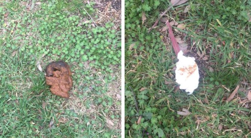 (L) Emma took a photo of the human faeces in the park which her dog partially consumed.Source:Supplied (R) There was toilet paper at the park where Yuri allegedly ate human excrement.Source:Supplied
