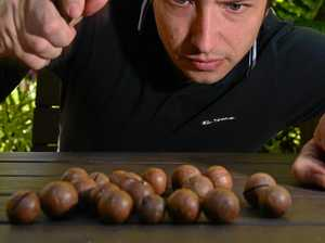 Macadamia nuts could save lives
