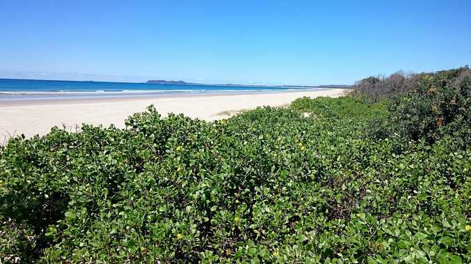 Bitou bush invades coastal dunes and prevents native species from growing and providing habitat.