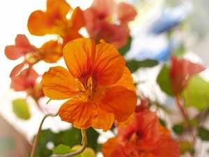 How to create an edible flower garden