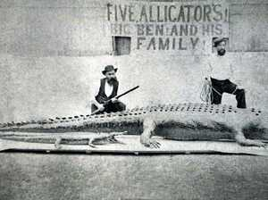 Meet Big Ben: CQ's biggest ever croc