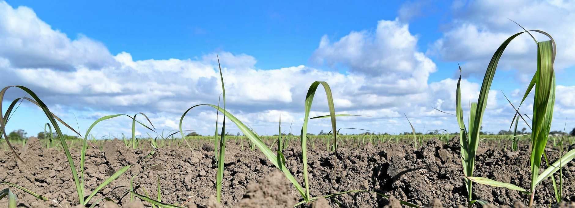 DRY BONES: Hervey Bay has endured its driest September in its history.