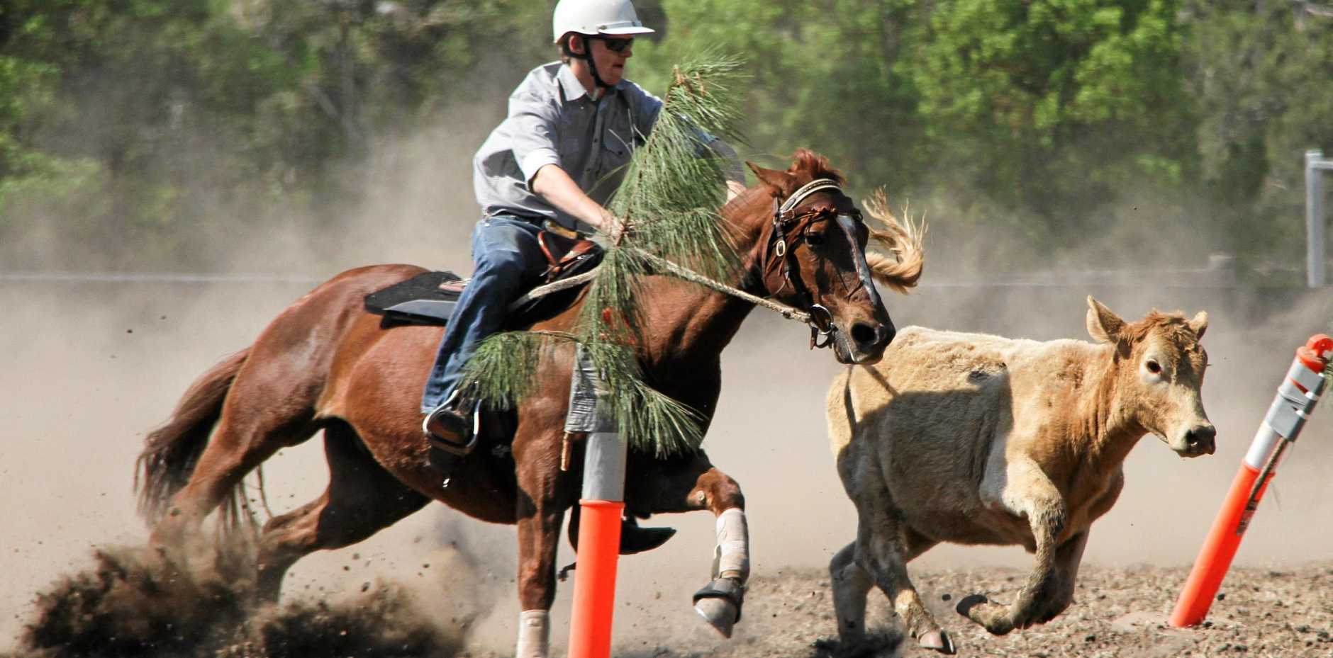HORSE SKILL: Cody Ensby in action at the Copmanhurst Campdraft.