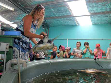 SPLASH! This green sea turtle, held by Australian Seabird Rescue general manager Kath Southwell, splashed some of the children on a tour of seabird rescue's headquarters last Friday.