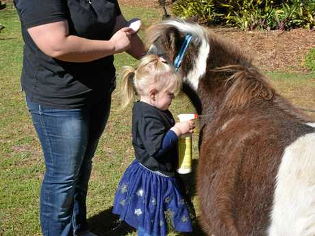 HELPING HANDS: Emily-Rose, 3, helps her mum groom pregnant mare Ritzy.