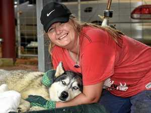Huskies lost during tornado found safe