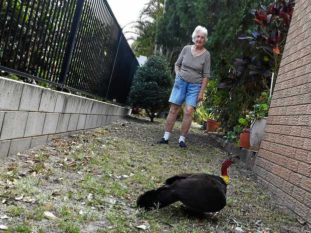 Yvonne Robinbson and Henry Blake, of Golden Beach, are having major issues with bush turkeys destroying their yard and neighbour's yards.