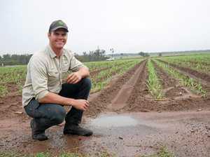 Precious rainfall makes for happy cane farmers