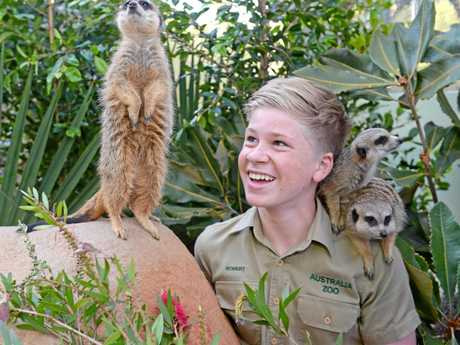 AUSTRALIA ZOO: The new meerkats will be unveiled to the public this Saturday.