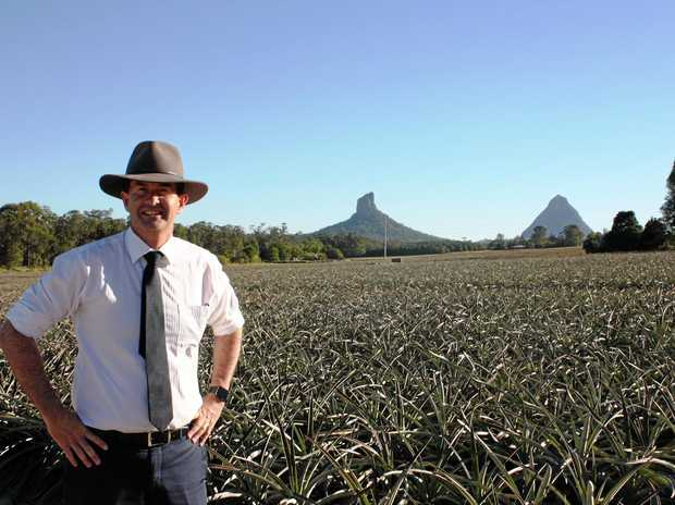 PICTURE-PERFECT: Federal Member for Fisher Andrew Wallace in the Glass House Mountains.