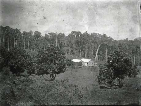 Jill Lillingstone's grandparents were among the first to settle in Maleny.