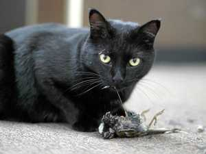 Cats kill more than one million birds every day