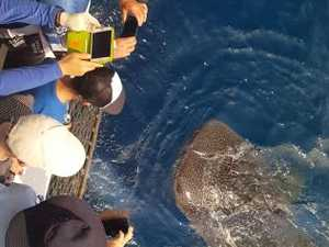 Whale of an shark encounter for fisherman