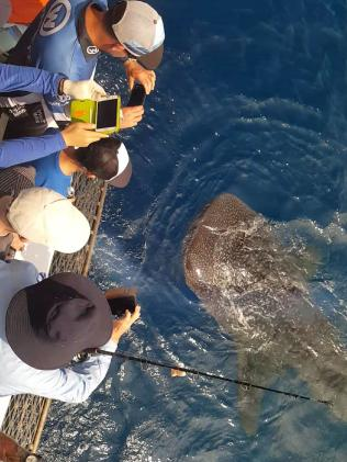 Passengers onboard Cairns Reef Fishing Charters' vessel encounter a whale shark. Photo: Jason Mansfield