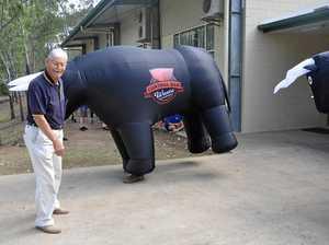 Pinefest horns in on bull-headed idea