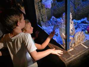 Sea Life ready to celebrate World Octopus Day