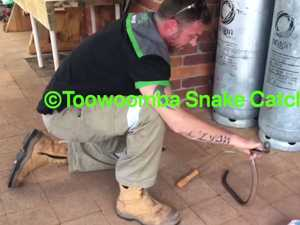 Red belly lashes out at snake catcher in slow-mo video