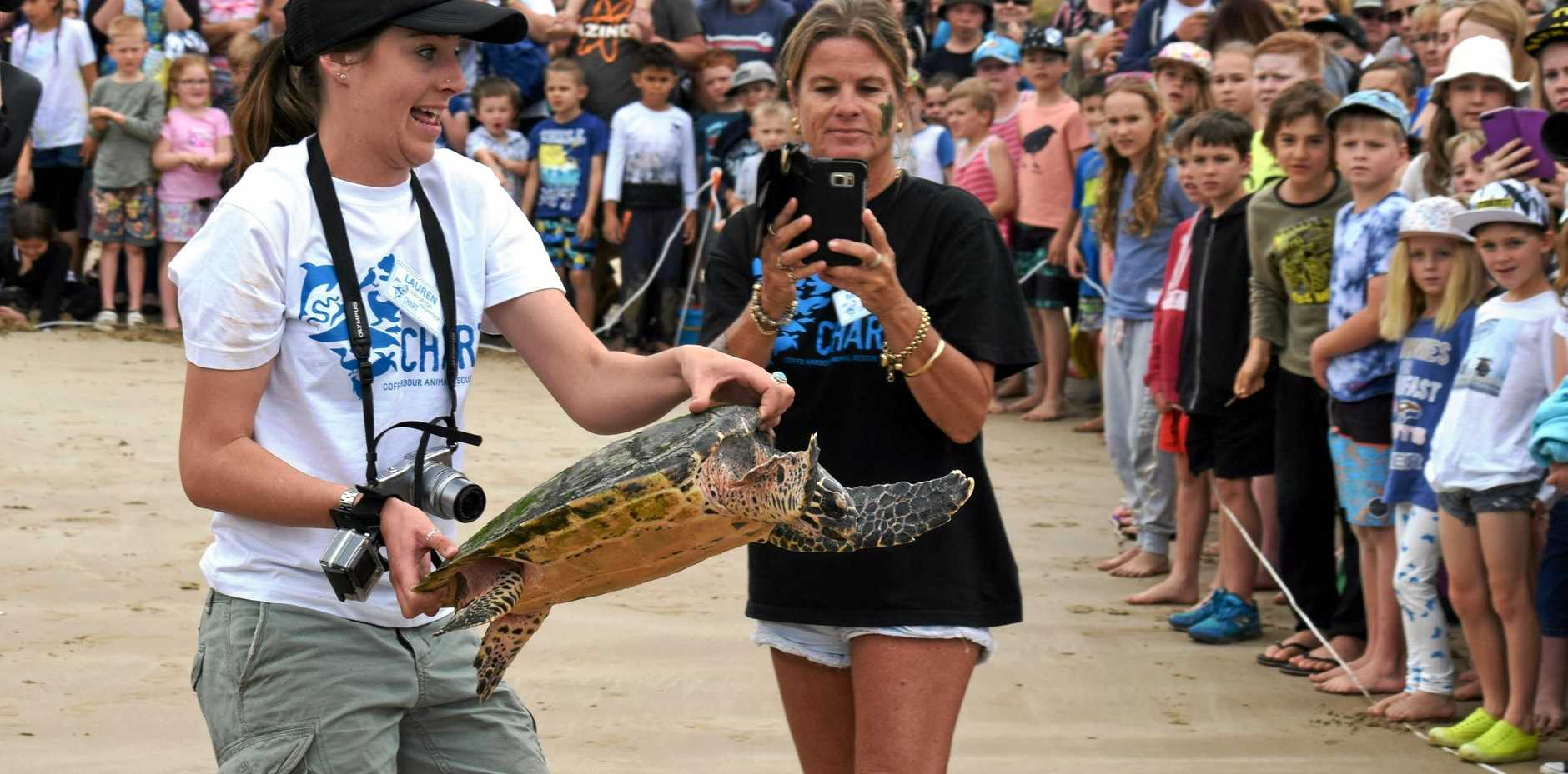 Diggers Beach saw the release of two turtles today that were nursed back to health at Dolphin Marine Magic.