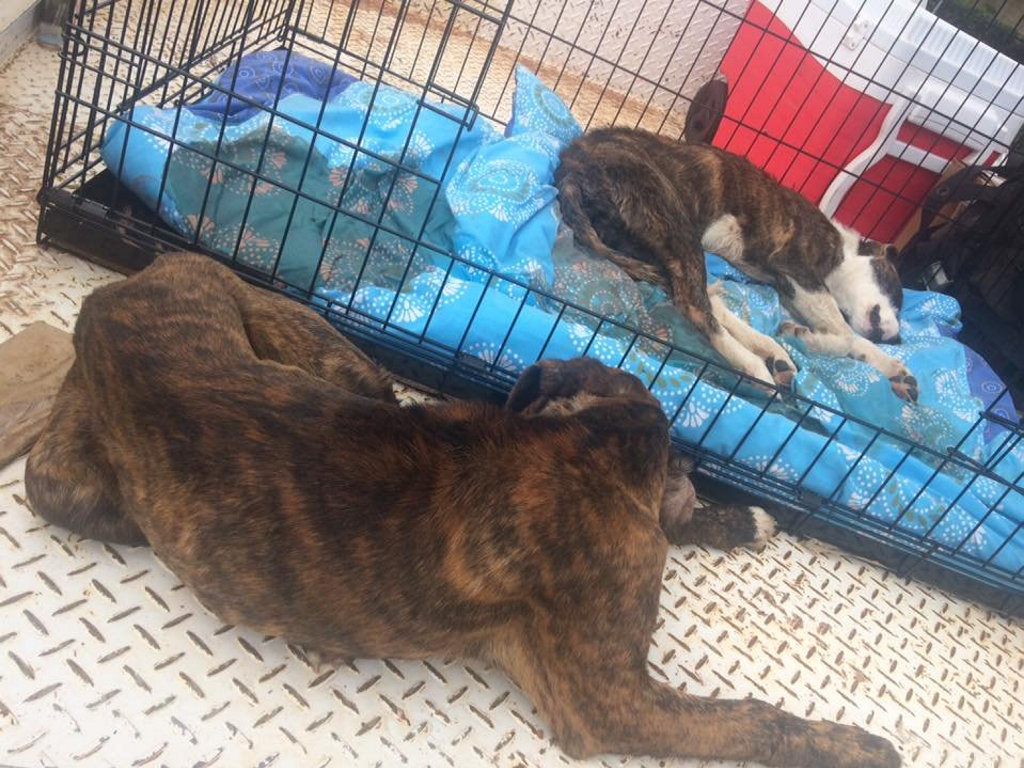 Off The Chain k9 Rescue founder Jess Otto rescued three dogs from a Queensland pound only to have two of them die.
