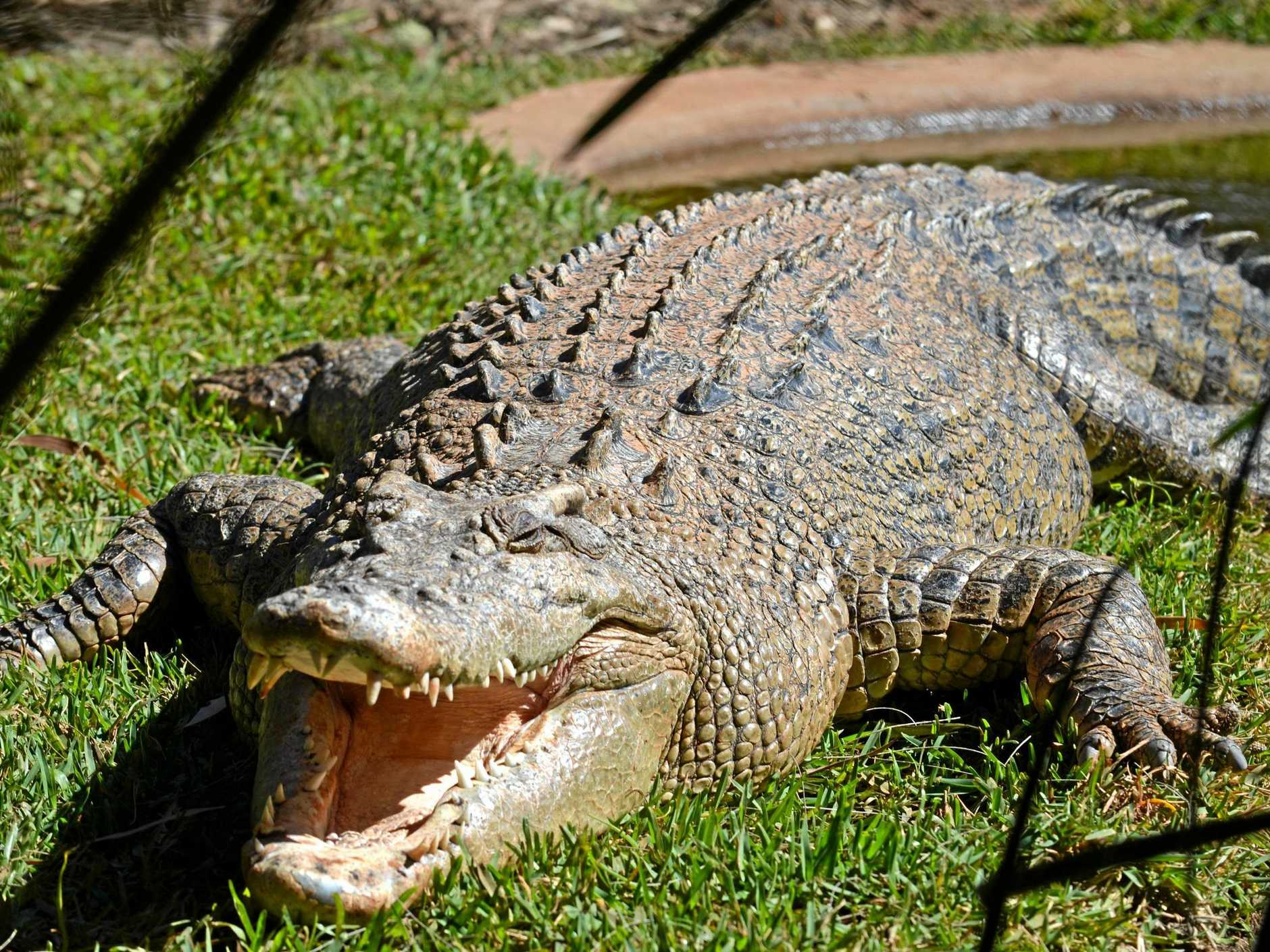 FIERCE: Are crocodiles moving further south or is there just more people on the water seeing them?