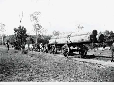 Local bullock team, horse hitched to a metal 'Dog Peg'.Attribution: Gympie Regional Libraries