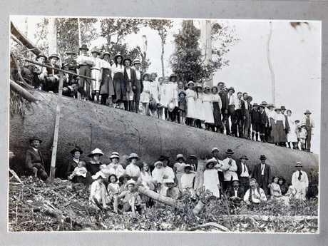 Loggers sit atop a giant log near Gympie. Circa 1872.