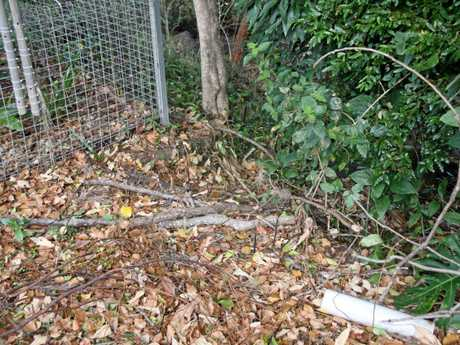 STORM DAMAGE: A Goonellabah resident has suffered water-related damage to home due to ex-Cyclone Debbie which have caused her house foundation to shift. Here the tree roots have been exposed by the rain.