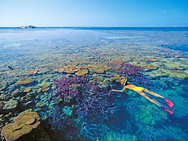 UNDER THREAT: The Great Barrier Reef.