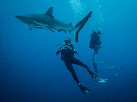 Madison Stewart and Valerie Taylor swim with sharks in a scene from the movie Blue.