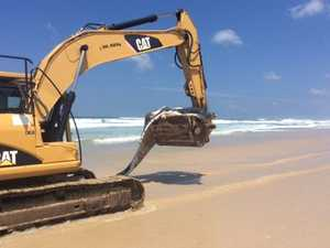Whale carcass removed from Ballina beach, taken to tip