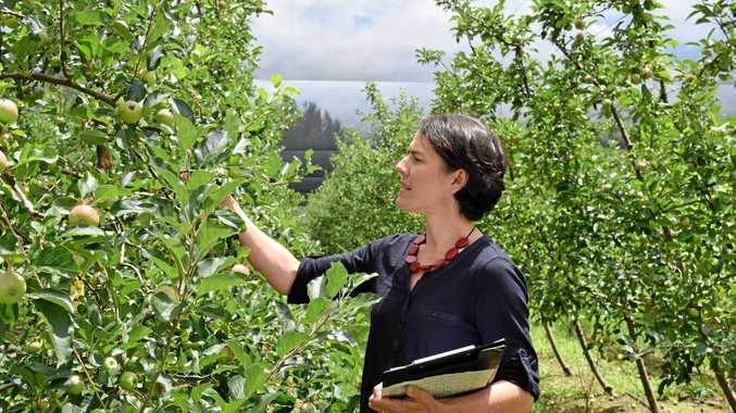 KEEP LEARNING: Dr Heidi Parkes inspecting apples at the Applethorpe research station, which is set to host an innovative agribusiness course next week.
