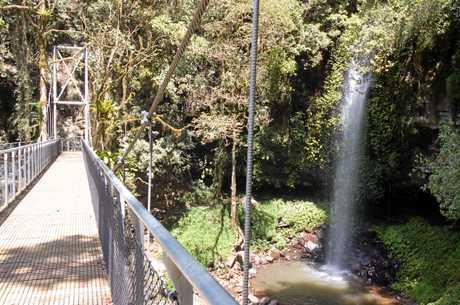 Dorrigo National Park Crystal Shower Falls suspension bridge.