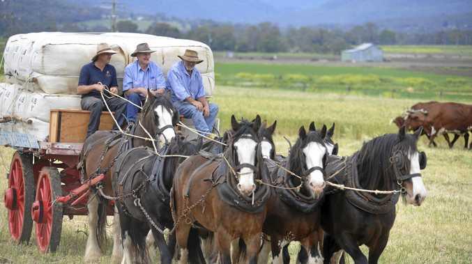 DRIVING HISTORY: Mick Bradford hosts his 17th Heavy Horse Day at Yangan on Sunday.