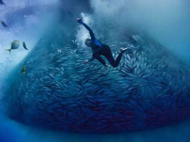 Diver Joel Gonzaga of the Philippine fishing boat Vergene works in and around a skipjack tuna fishing net in a scene from the movie Blue.
