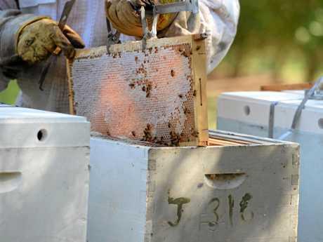APIARIST: Darren Pratt attending to hives on a local Macadamia farm.