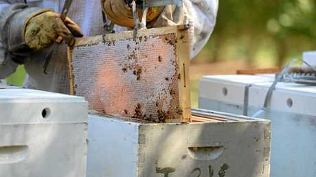 APIARIST: Darren Pratt attending to hives on a local Macadamia farm.