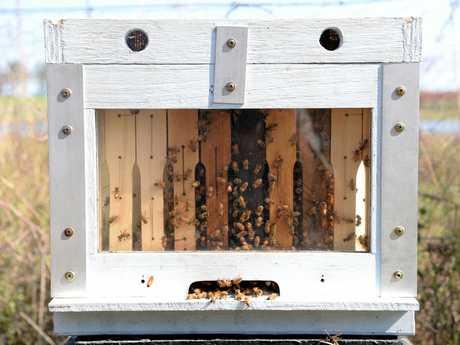 BUNDABERG HONEY: Darren Pratt's hives on the farm.