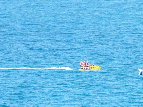 A photograph taken from Point Cartwright on Sunday of a jet ski and whale is now subject to a Department of Environment and Heritage investigation.