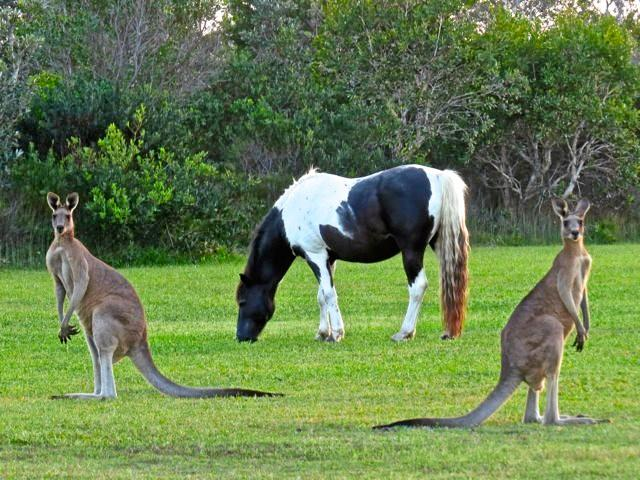 Brumby having dinner with friends.