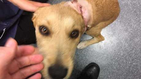 Clarissa is recovering after being shot with a rifle at Leyburn.