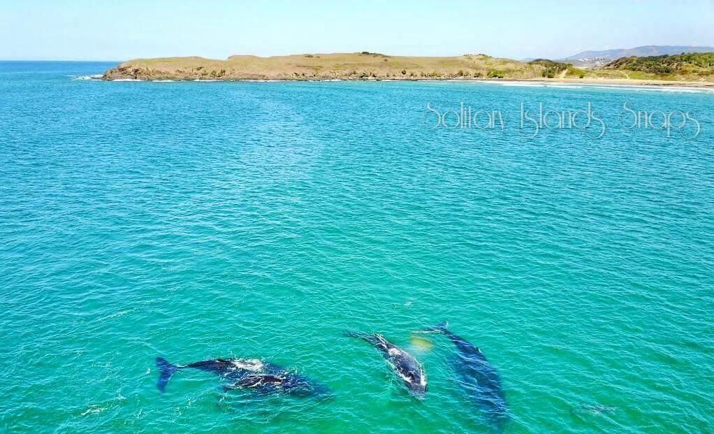 whales at Sandy Beach.