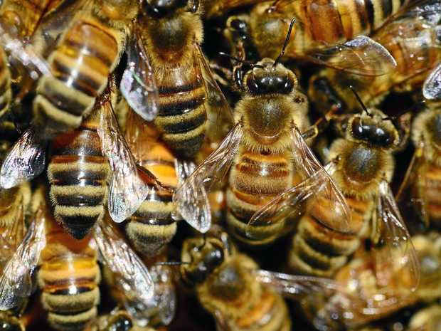 Mackay region beekeepers are being urged to inspect their hives for American foulbrood disease.